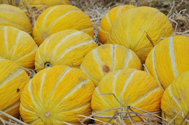 Casaba melons have thick, bright yellow rinds.