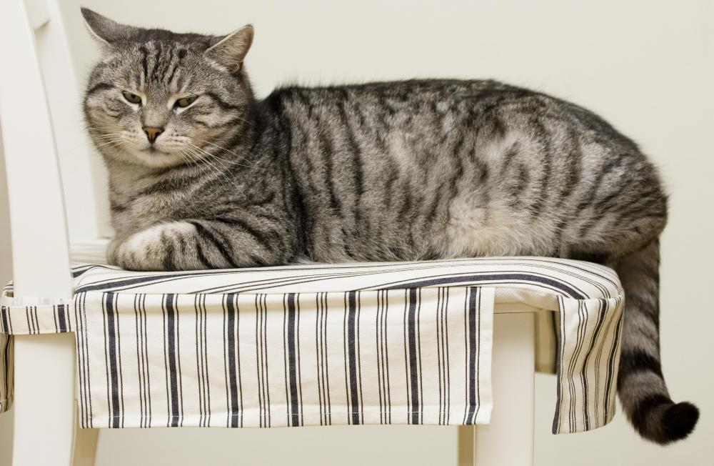 A cat lying on a ticking chair cover.