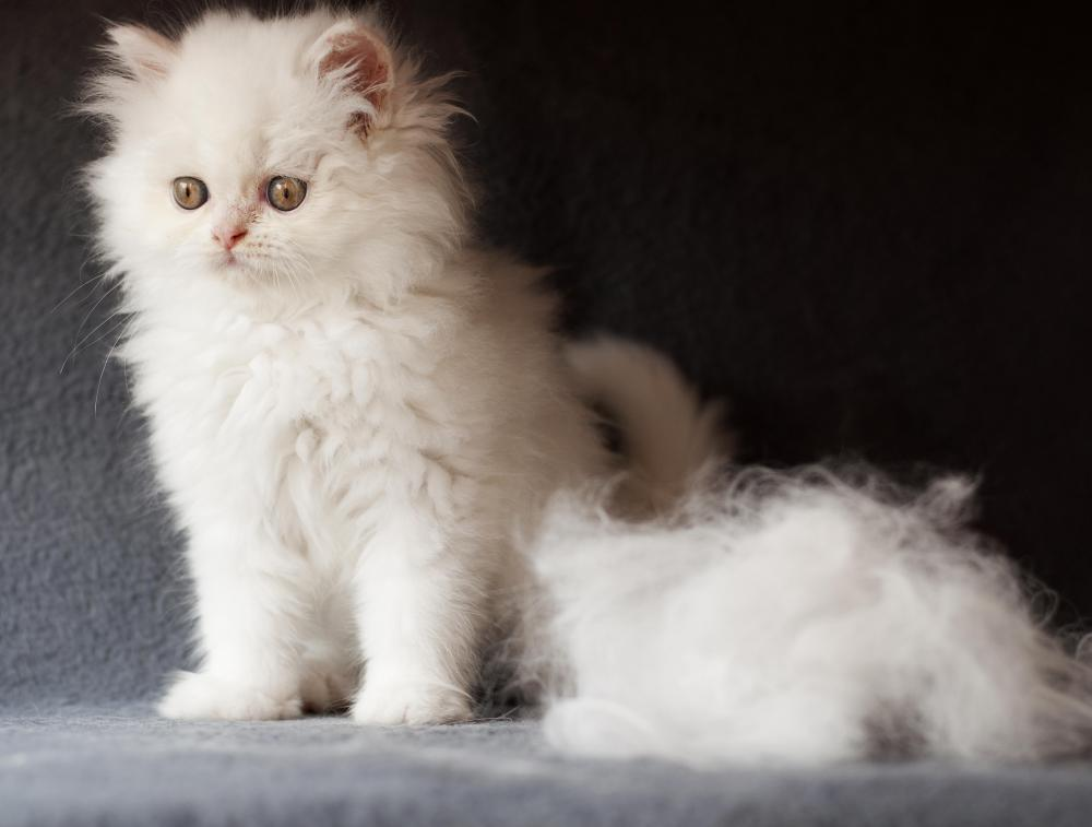 How To Stop Cat Moulting