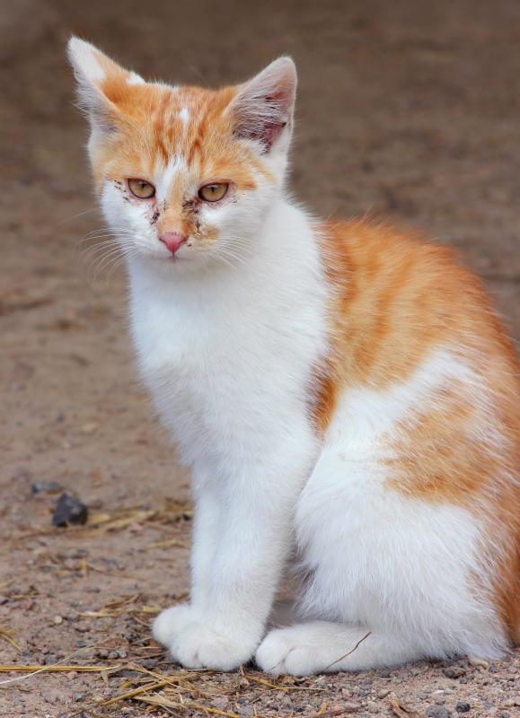 Cats that live in areas with large populations of stray or feral cats are more likely to become infected with FeLV.