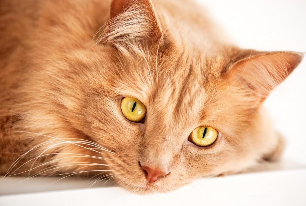 Incontinence is most common with older cats.
