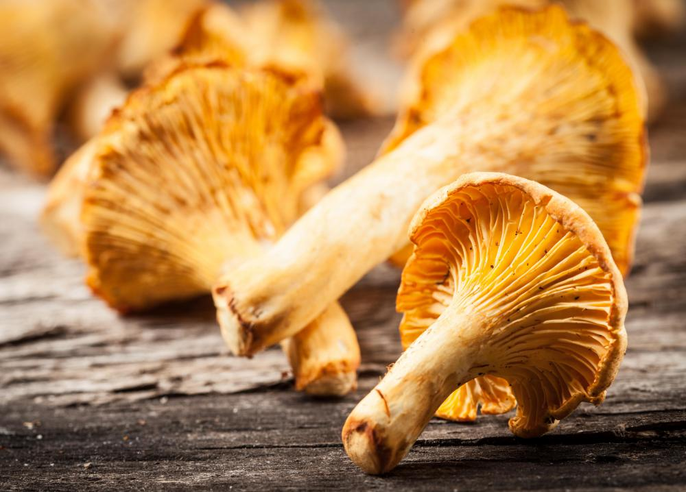 Chanterelle mushrooms are a type of wild fungi.