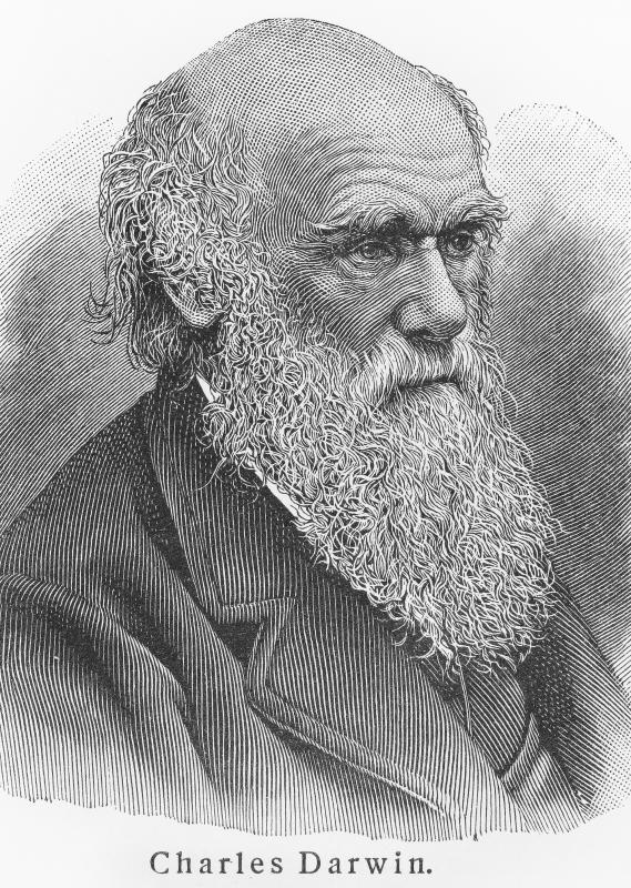 Darwin dove further into the study of endemic species when he observed the differing species of finches living on the Galápagos Islands.