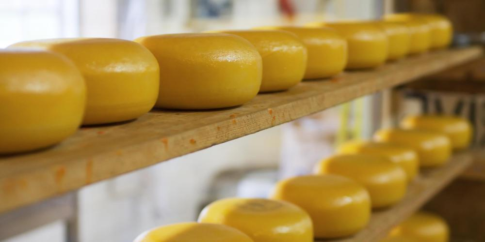 Kosher cheese wheels aging on shelves.
