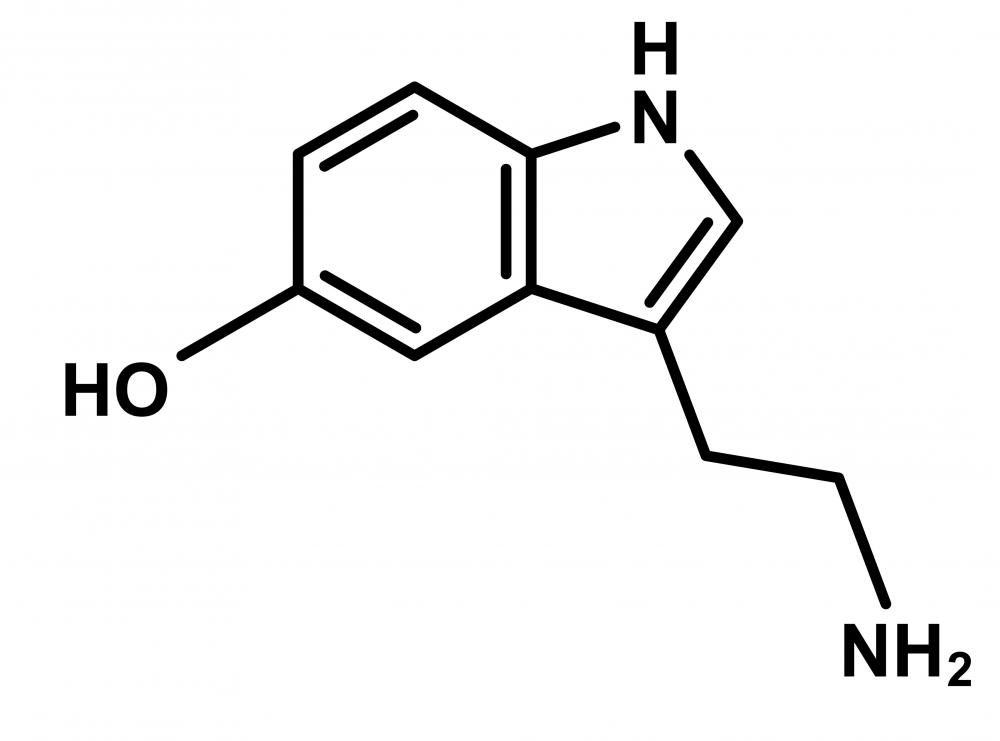 5-hydroxytryptophan, also known as 5-HTP, is a precursor to the development of typtophan and ultimately seratonin.