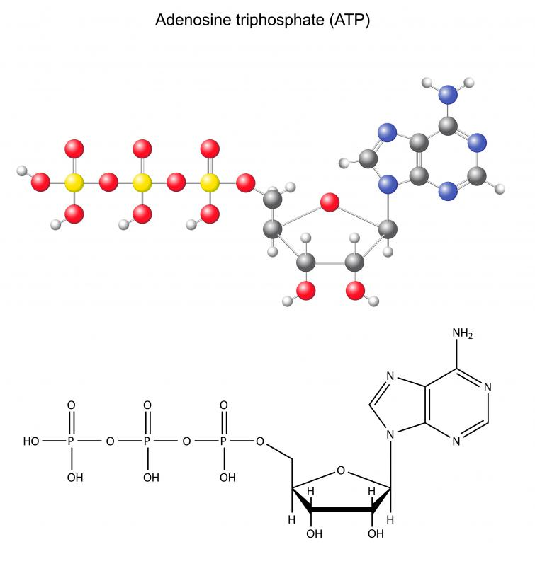 ATP is formed by the addition of an inorganic phosphate group to ADP.