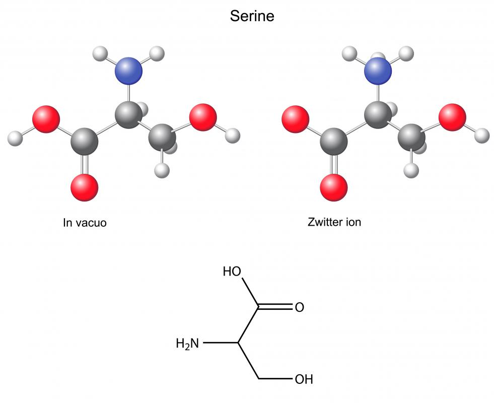 There are 12 non-essential amino acids synthesized in the body, including serine.