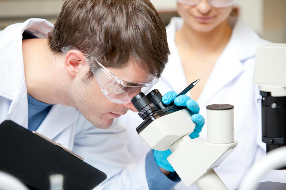 A pathologist will look at a biospsy under a microscope.