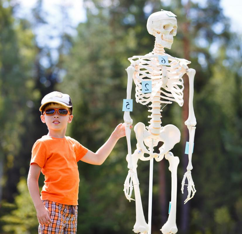 Children may be able to learn more about their own anatomy upon visiting a museum.