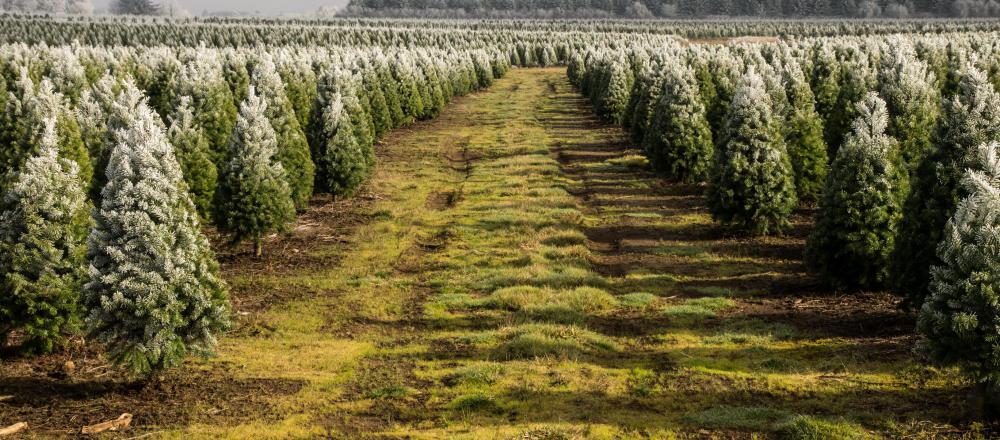 It's often easiest to buy from small farms around the holidays, when specialty crops like Christmas trees are sold.