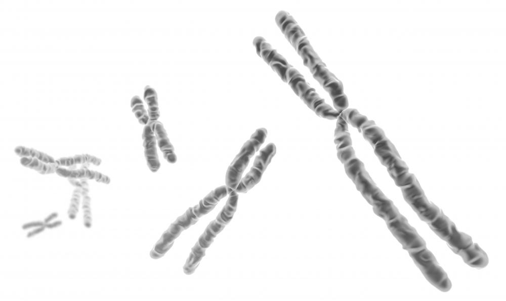 Chromosomes contain a living organism's DNA.