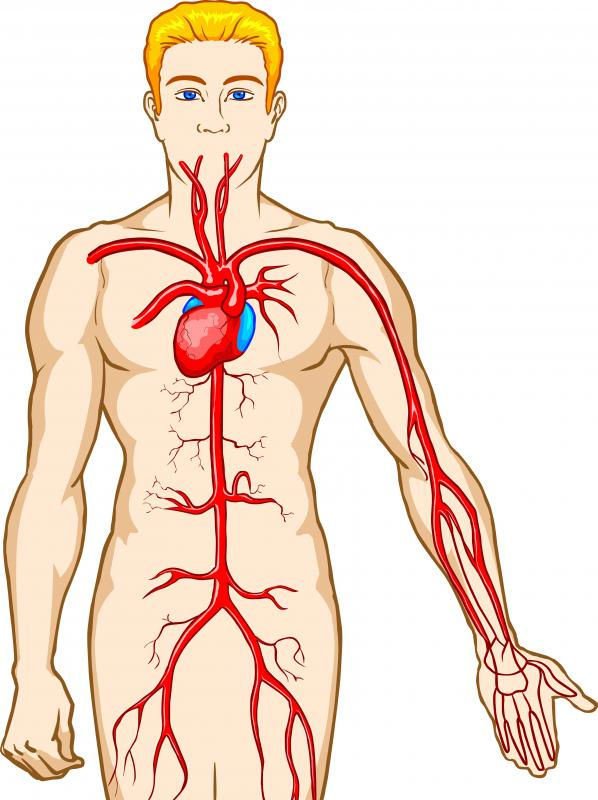 The heart pumps oxygenated blood throughout the body.
