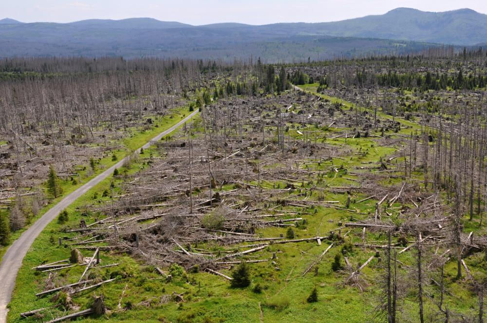 What are Some of the Effects of Deforestation? (with pictures)