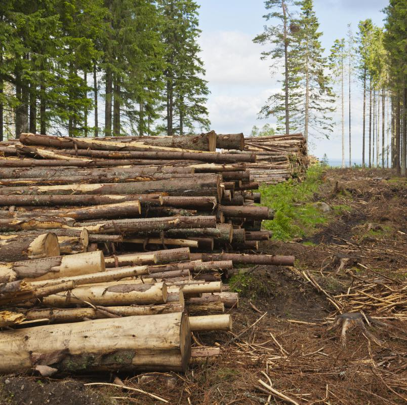 Deforestation is the removal of all trees in an area and using the land for other purposes.