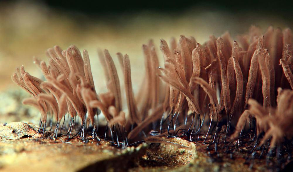 Fungi tend to grow in filamentous structures known as mycelium.