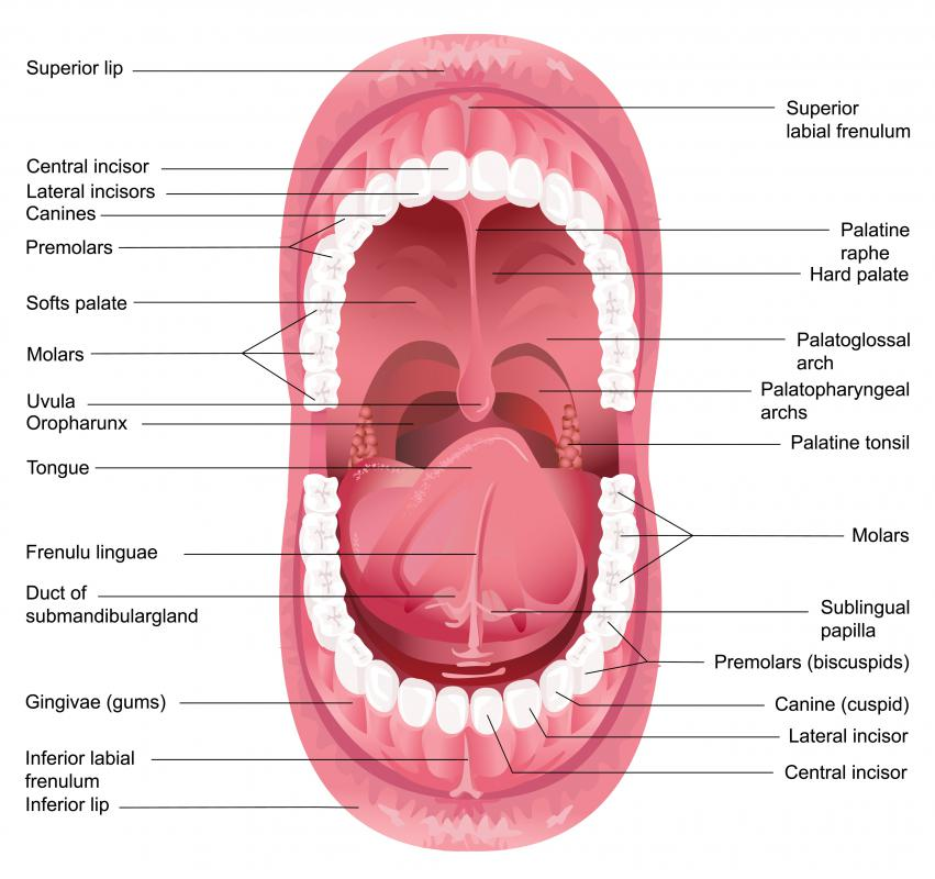 The soft palate, also called the muscular palate or velum, is the portion of the roof of the mouth behind the hard palate.