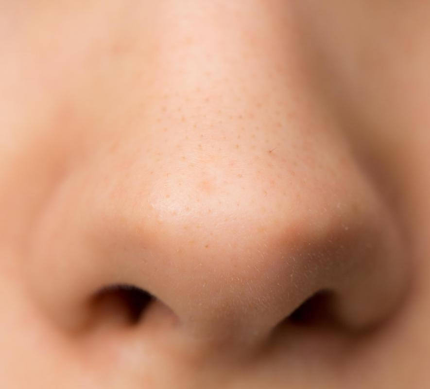Nasal bones vary greatly in size and shape, causing the nose to appear different in individuals.