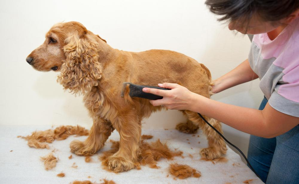 Dog getting its fur shaved at the dog groomer