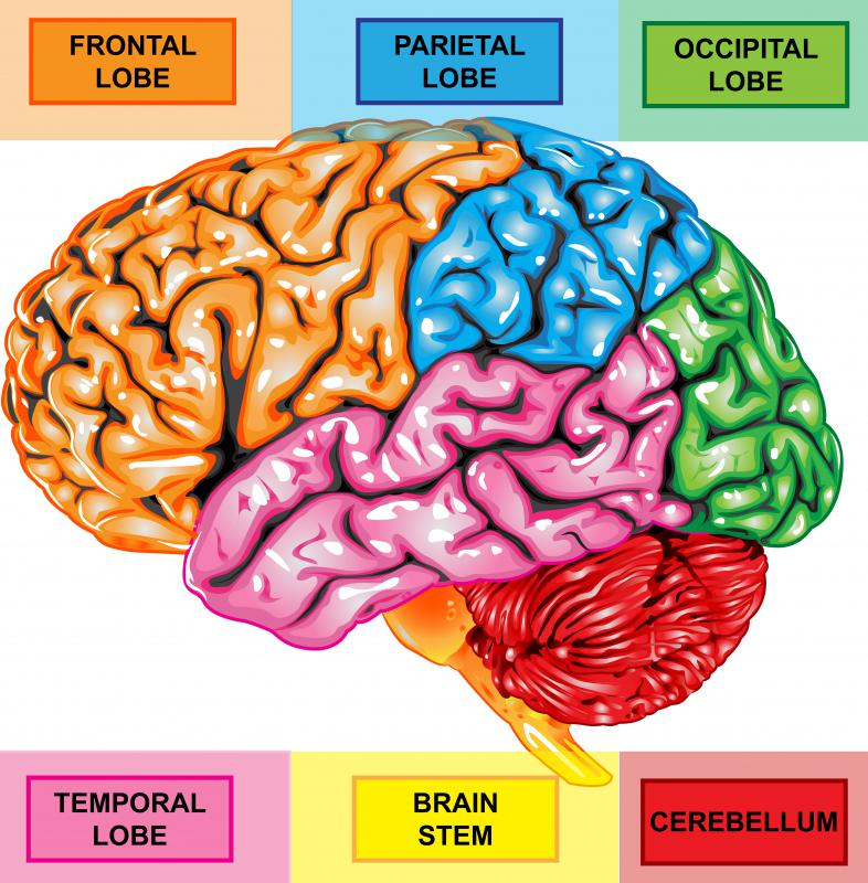 Four lobes comprise each cerebral hemisphere.