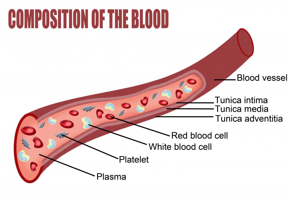 A diagram showing the composition of the blood, including the platelets and red blood cells.