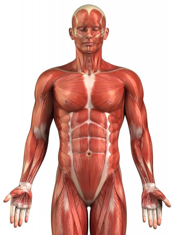 what exercises result in better muscle definition?, Muscles