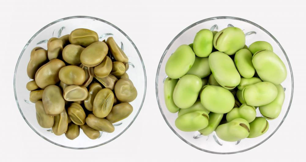 What are Fava Beans? (with pictures)