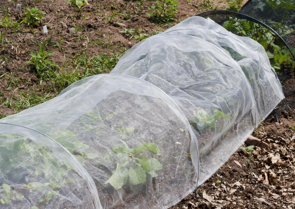 A protective covering may help protect plants from frost.