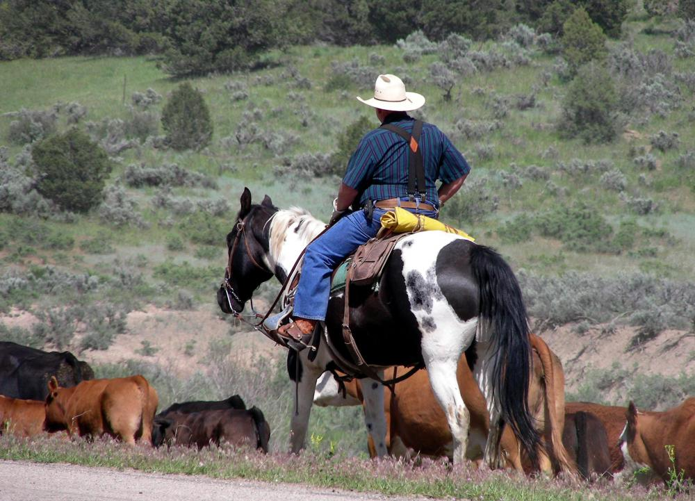 A dude ranch holiday gives guests a taste of ranch life.