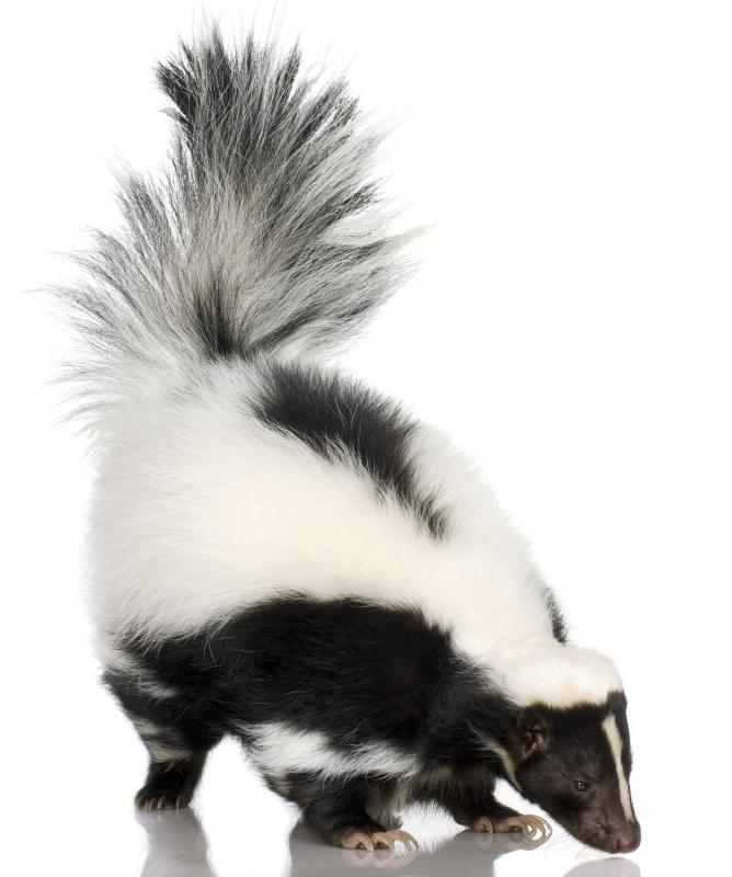"""Drunk as a skunk"" is a common cliche phrase."
