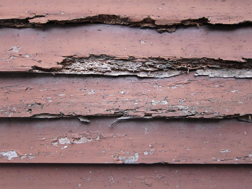 What Are The Signs Of Termite Damage With Pictures