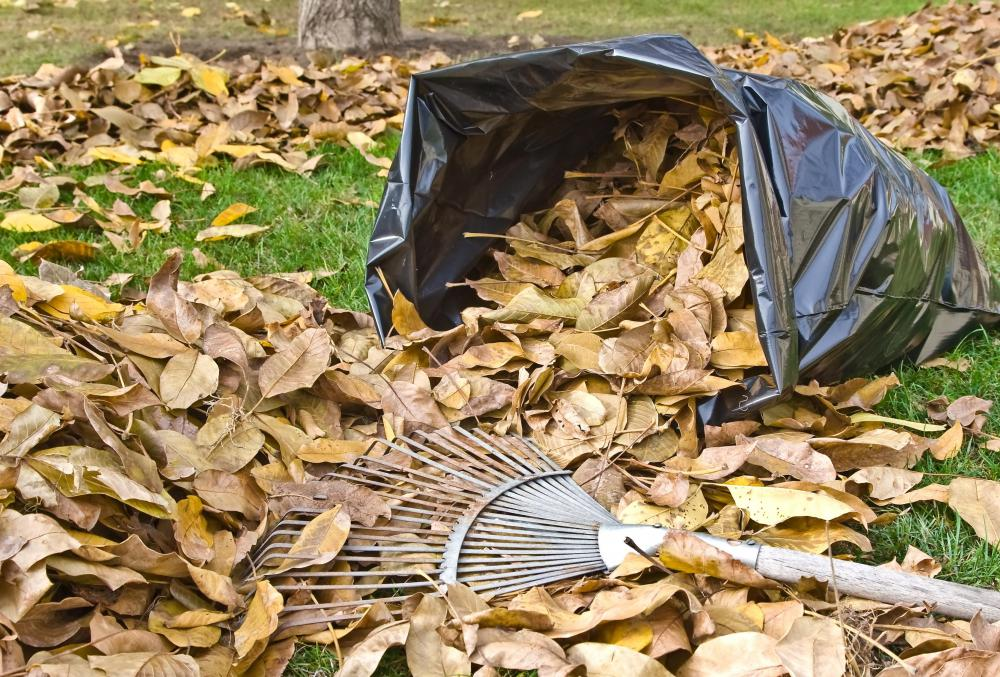 A groundskeeper may be responsible for raking leaves.