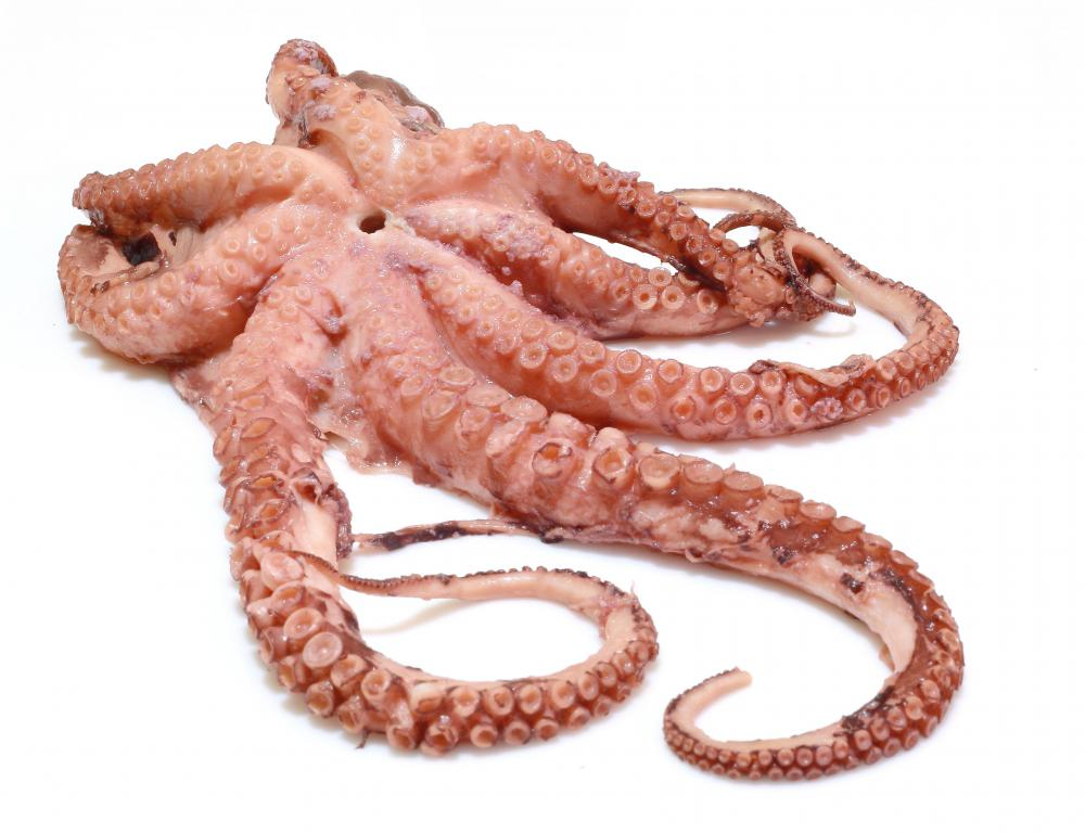 Octopus can be used as neta, or the topping, for nigiri sushi.