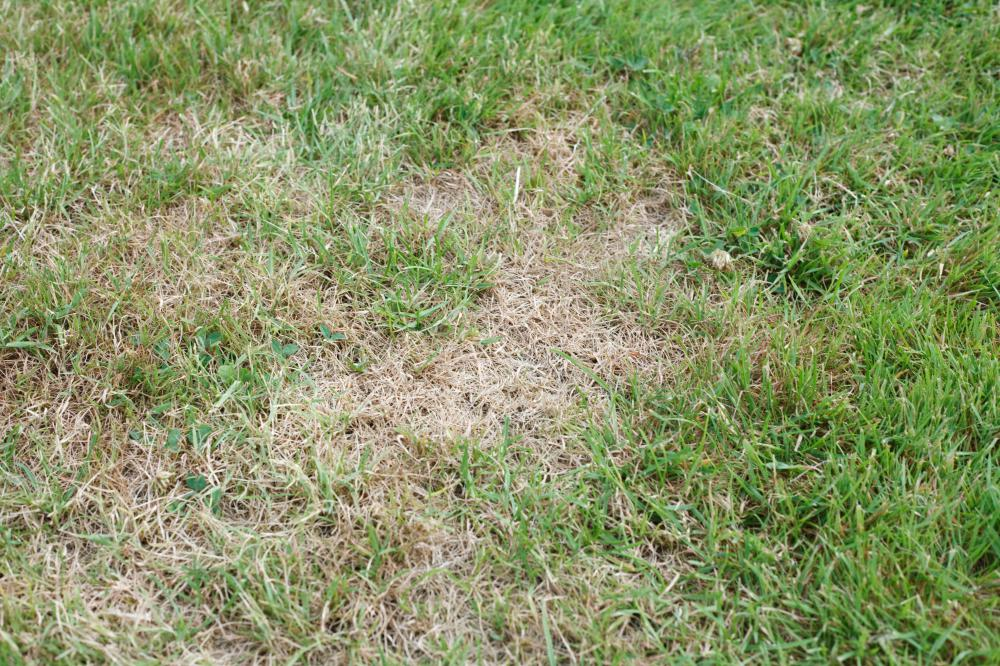 Aeration can help an unhealthy lawn.