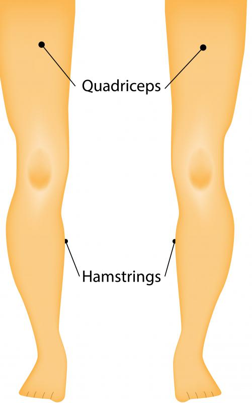 Quadriceps are located on the front of the thigh.