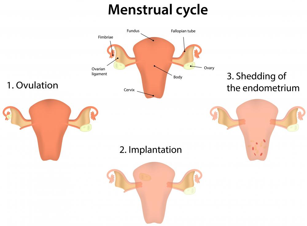 Cervical mucus dries up within a few days prior to implantation or menstruation.