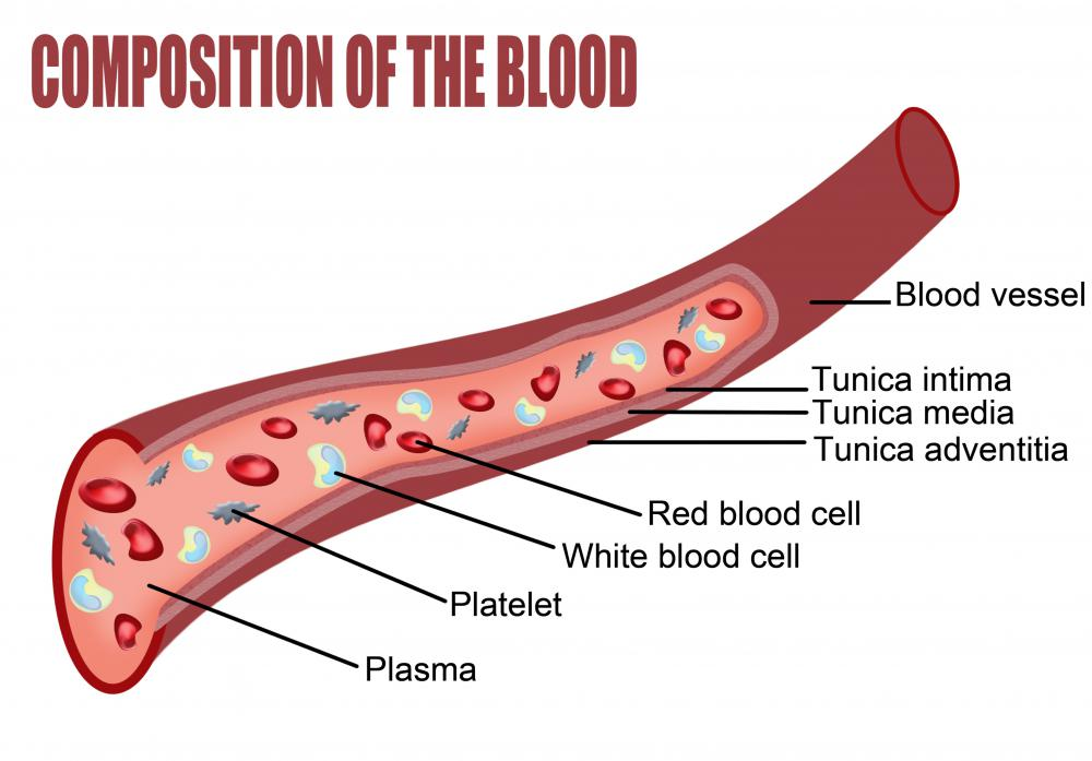 A diagram of the composition of the blood, including platelets.
