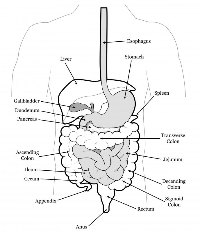 What is the Rectosigmoid Colon? (with pictures)