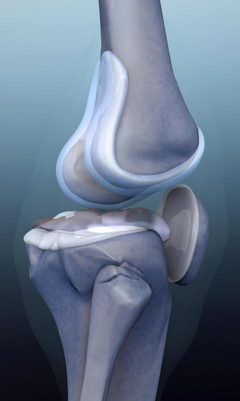 Cartilage plays an important role in joints throughout the body, such as the meniscus in the knees, but can wear out after heavy use or injury.