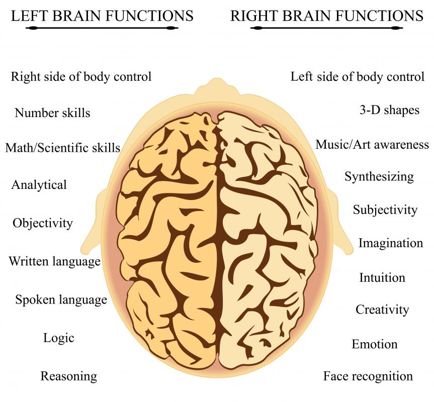 Each side of the brain is responsible for different tasks and modes of thought.