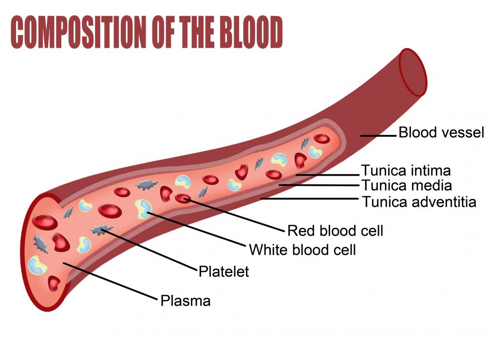 Red and white blood cells, platelets, and other components of blood flow in plasma inside a blood vessel.
