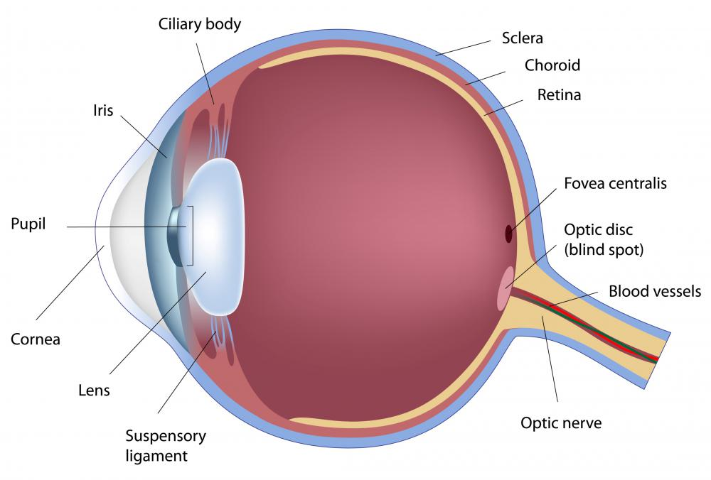 The retina is a light-sensitive area in the back of the eye.