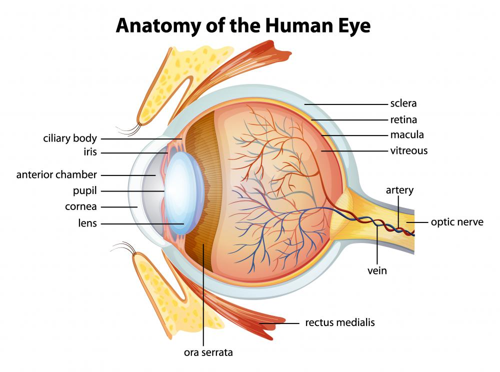 During laser eye surgery, the cornea is reshaped.