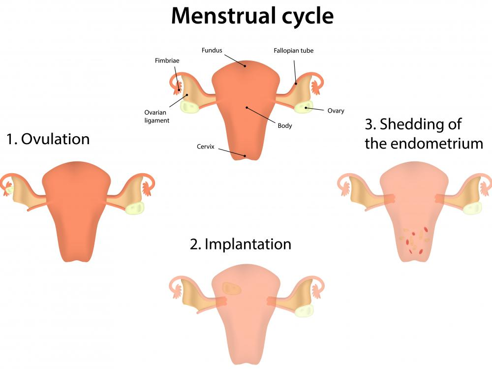 Bloating often occurs during the menstrual cycle.