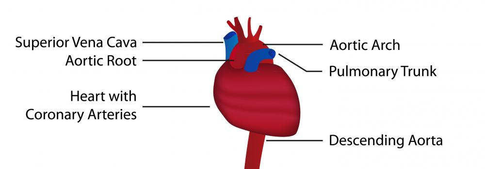What Is The Structure Of The Circulatory System