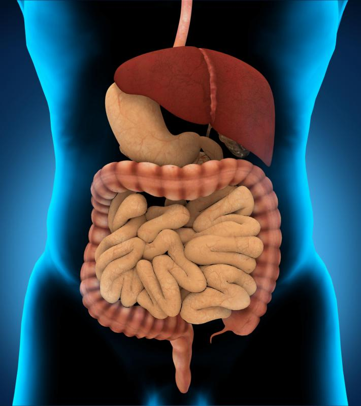 One type of enzyme found in the body are digestive enzymes, which aid in digestion.
