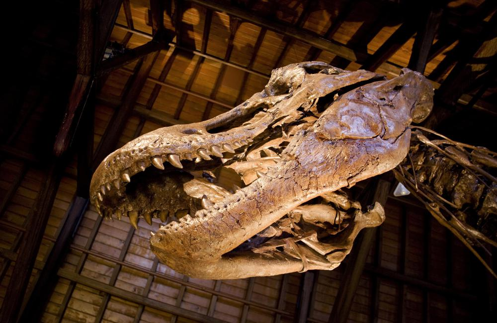 The Utah Museum of Natural History features dinosaur exhibits.