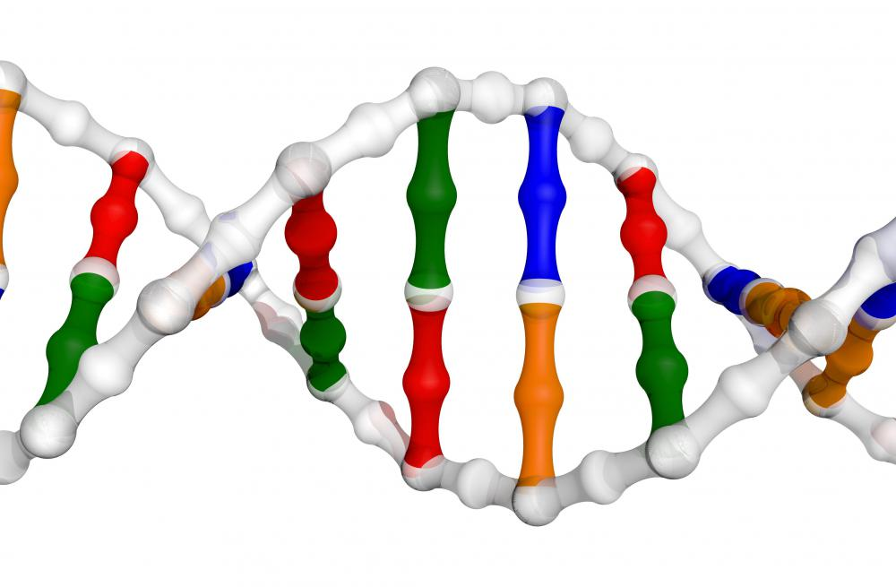 The blueprints for an individual's physical development are encoded in their DNA.