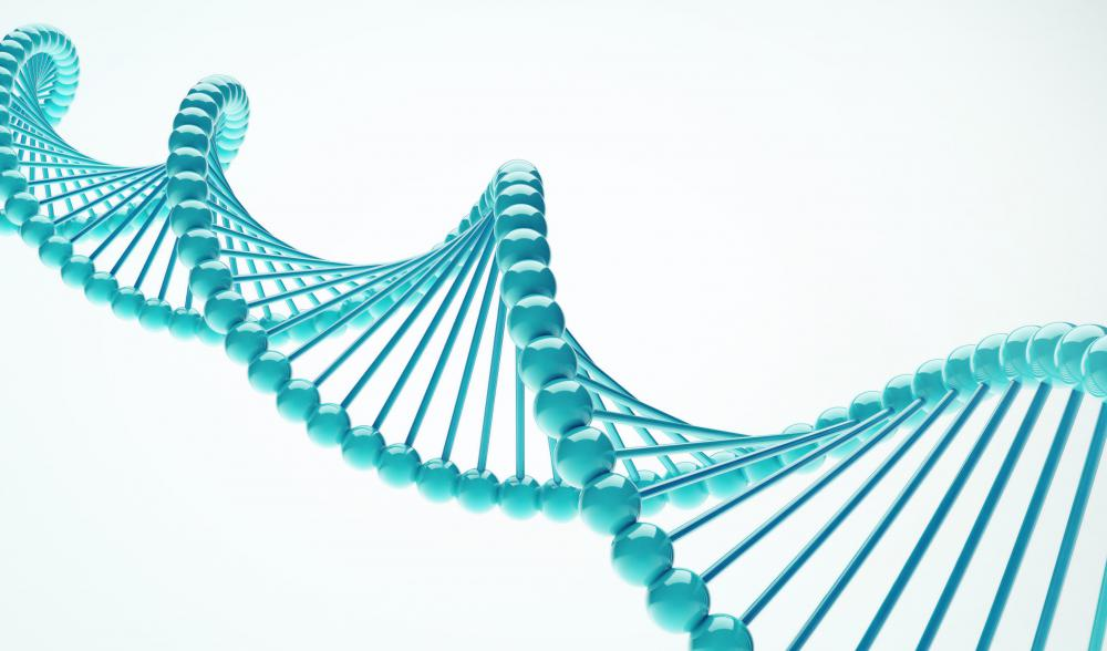 DNA holds all of an organism's genetic information.