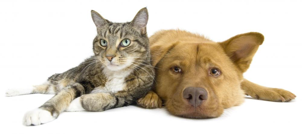 Dogs and cats have different nutritional needs.