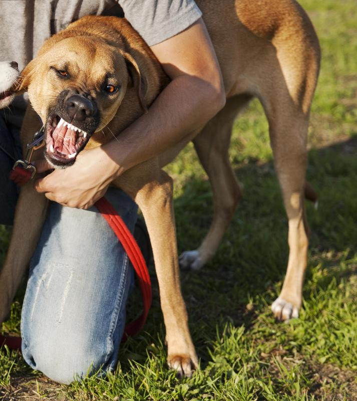 Dog owners are legally liable for bite injuries inflicted by their dog.